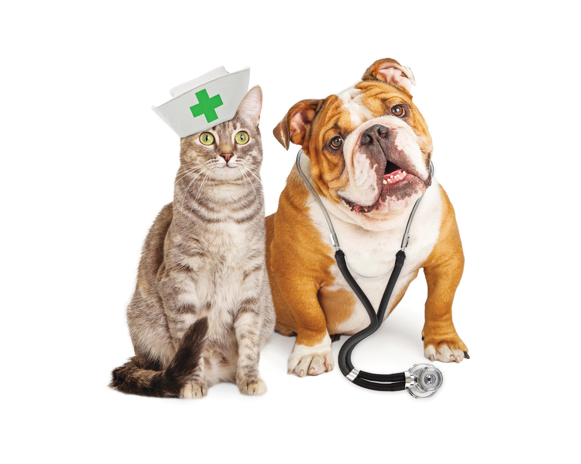 dia do m u00e9dico veterin u00e1rio english bulldog clipart black and white old english bulldog clipart