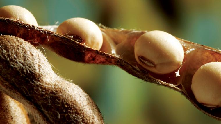 Corteva lança Cordius, nova marca de licenciamento de sementes