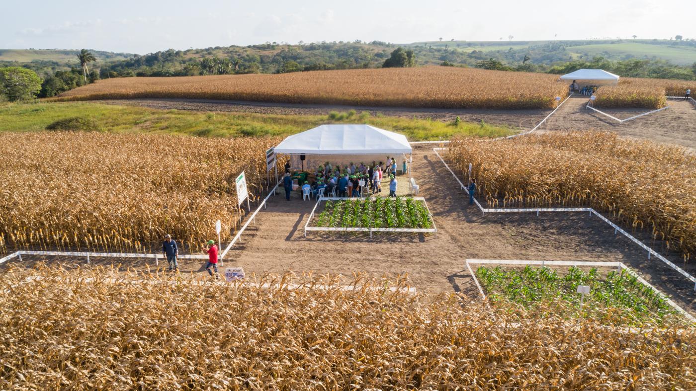 Programa Prospera eleva produtividade de pequenos agricultores de Pernambuco