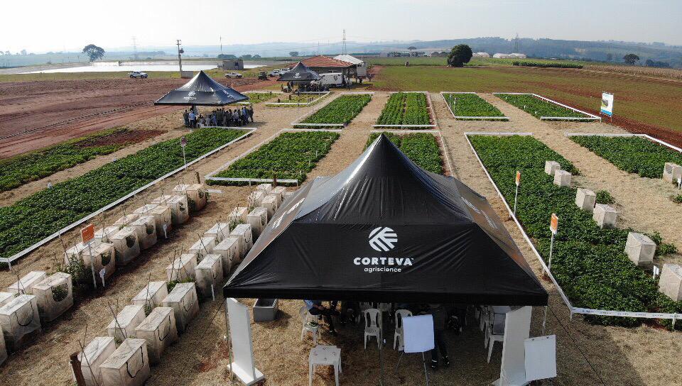 Treinamento voltado ao setor de hortifrúti mostra soluções para pragas e doenças