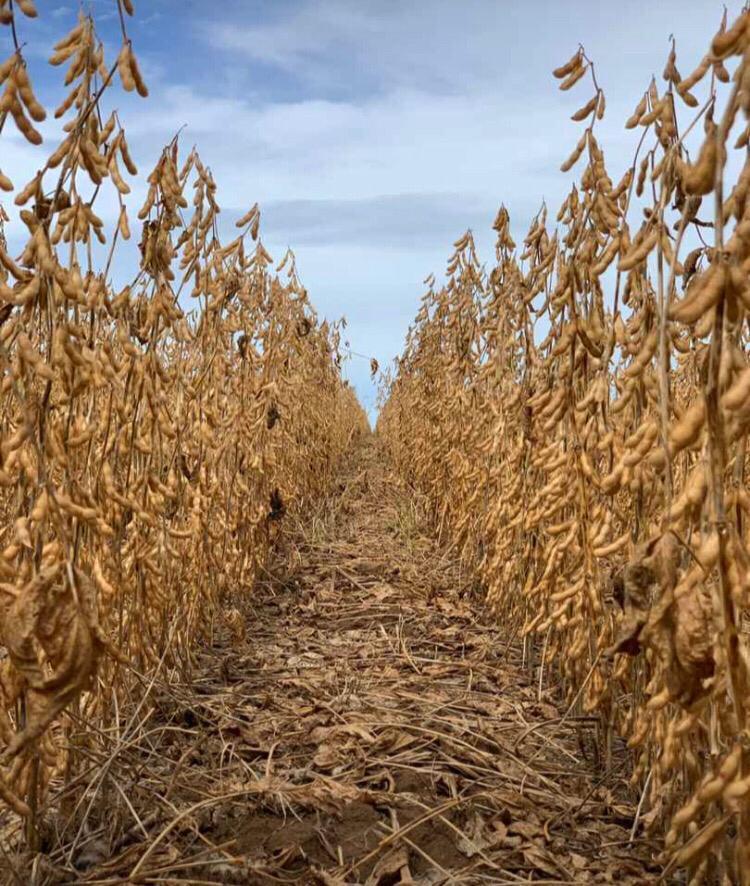 ENTREVISTA: Frederico Barreto, líder da plataforma de sementes, fala sobre o diferencial de Cordius