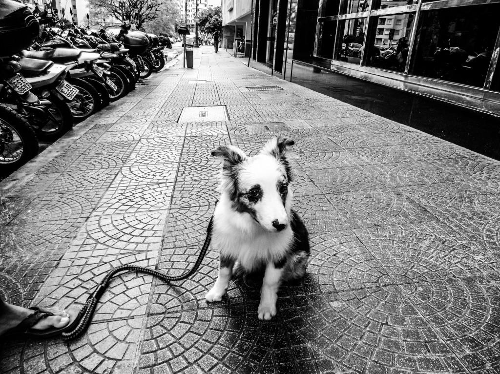 TQ SÃO PAULO 17.01.2017 METRÓPOLE ESPECIAL ANIVERSÁRIO SP EXCLUSIVO EMBARGADO cachorro na Rua Major Quedinho. Fotos da cidade de São Paulo produzidas com celular Motorola. FOTO TIAGO QUEIROZ/ESTADÃO  - TIRADA COM MOTO Z PLAY + HASSELBLAD TRUE ZOOM