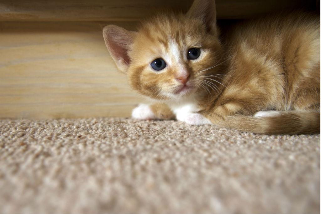 Seja qual for o animal, (os gatinhos também podem ficar assustados), o importante é fazer um treinamento gradual o ano todo