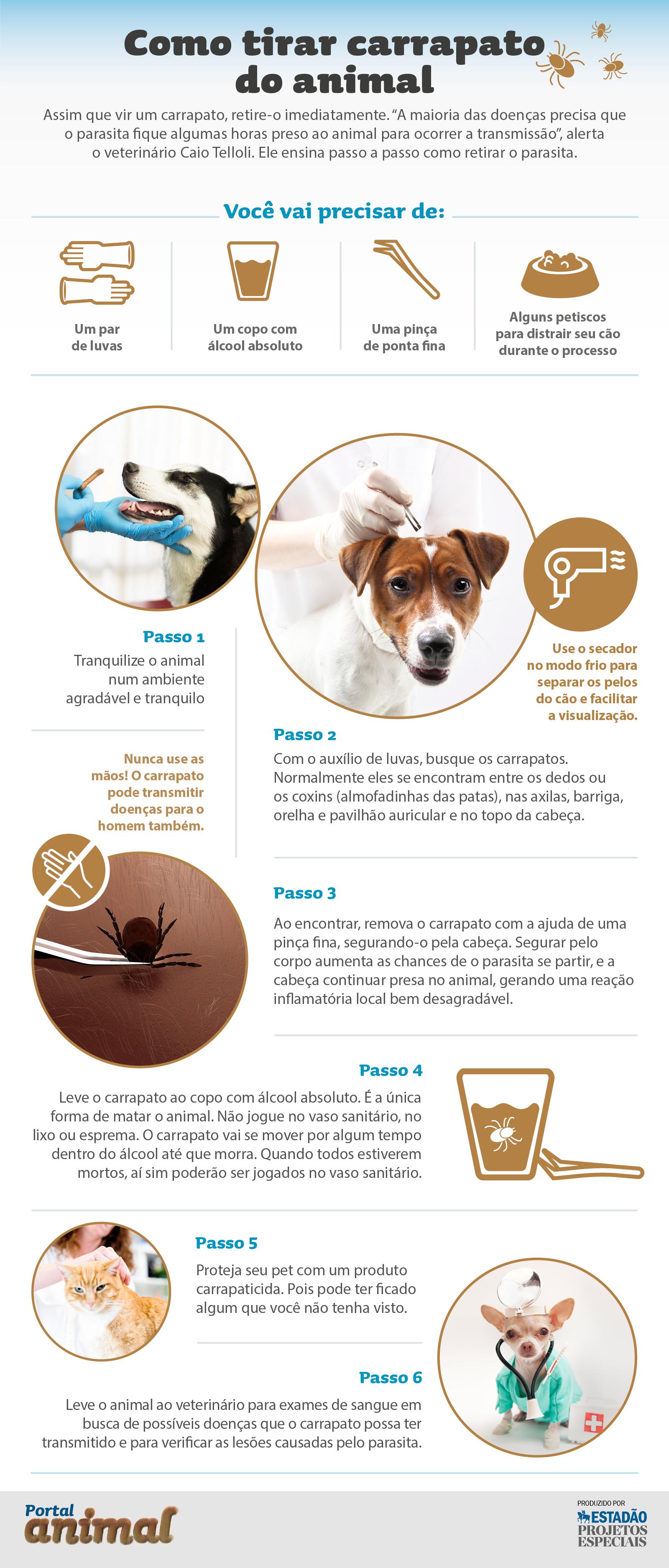 Eliminar pulgas de casa cmo eliminar pulgas de la casa - Pulgas en casa ...